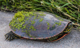 Slower by Pistos, photography->reptiles/amphibians gallery