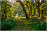 Entering The Forest Edge by corngrowth, photography->nature gallery