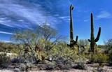 The Two Saguaros by snapshooter87, photography->landscape gallery