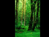 Forest of Green by photoimagery, photography->landscape gallery