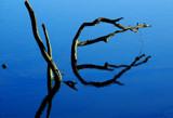 pas de deux by solita17, Photography->Water gallery