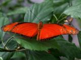 Beat butterfly by rawtsn, Photography->Butterflies gallery