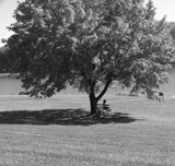 Under the Old Oak Tree by thebitchyboss, Photography->Shorelines gallery
