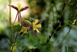 Columbine by doughlas, photography->flowers gallery