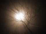 Tree by bartosz_b, Photography->Nature gallery