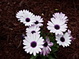 Misty Purple by Stevenn120, Photography->Flowers gallery