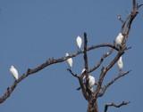 !!! Welcome December !!! by bijantalukdar, photography->birds gallery