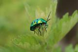 Ladybug by sumeetonline, Photography->Macro gallery