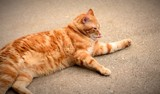 Laid Back Tom T. by tigger3, photography->pets gallery