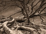 Tree by Paul_Gerritsen, Photography->Landscape gallery