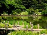 Green Tree Zinger by jojomercury, Photography->Gardens gallery