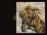 Rasmus by MarianaEwa, Photography->Animals gallery
