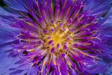 Floral Fireworks by aboogie, photography->flowers gallery