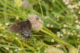 Spicebush Swallowtail… by unclejoe85, photography->butterflies gallery