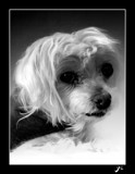 poppy`s yearbook pic by gse1978, Photography->Pets gallery