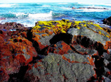 sea food by manodshark, Photography->Shorelines gallery