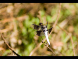 dragon fly by tbhockey, photography->insects/spiders gallery