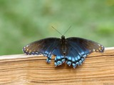 Mystical Warrior by Hottrockin, Photography->Butterflies gallery
