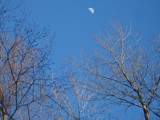Trees an the Moon by m_koempel, Photography->Skies gallery