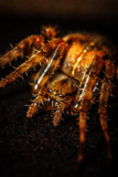 Warning Spider Ahead by Eubeen, photography->macro gallery