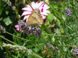 One Spot by Judek, Photography->Butterflies gallery