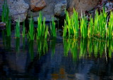 just a little green by solita17, Photography->Shorelines gallery
