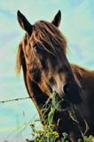 Horse by JaiJoli, photography->animals gallery