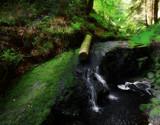 Just a Log by biffobear, photography->waterfalls gallery