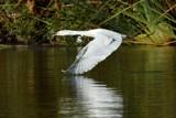 Below the Radar by garrettparkinson, photography->birds gallery