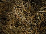 Needles by jariahtiainen, Photography->Nature gallery