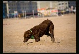 Must...Dig by avedeloff, photography->pets gallery