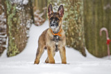 Pal Joey by slyyogi, photography->pets gallery