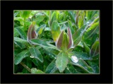 Euphorbia by Elini, Photography->Flowers gallery