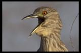 Quiet on the Set !!!!! by garrettparkinson, Photography->Birds gallery