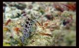 Little fella by michaeloneill, Photography->Underwater gallery