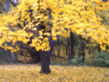 Golden Carpet by jojomercury, Photography->Landscape gallery