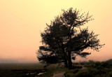 Monterey Cypress at Sunrise by quickshot, photography->nature gallery