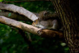 Lazy Days by photog024, Photography->Animals gallery
