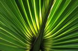 Palm Light by CanoeGuru, Photography->Nature gallery