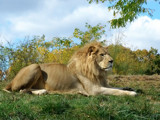 King Of The Beasts by BossCamper, photography->animals gallery