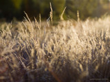 summertime grasses by jzaw, Photography->Nature gallery