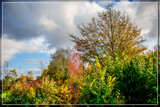 Fall Palette 3 by corngrowth, photography->landscape gallery