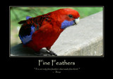 Fine Feathers Poster by LynEve, photography->general gallery