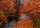 Woodland Stream by SatCom, Photography->Landscape gallery