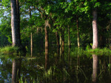 Pearl River Swamp by bayoubooger, Photography->Still life gallery