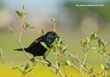 Grub Fest by doughlas, photography->birds gallery