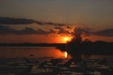 Sunset in the Lotus Fields of Bayou des Allemands by Vivianne, Photography->Sunset/Rise gallery