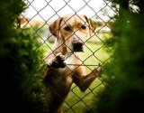 Labrador by JaiJoli, photography->pets gallery