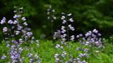 Garden Lovelies by tigger3, photography->gardens gallery
