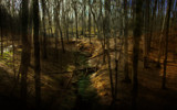 Forest Stream by casechaser, photography->manipulation gallery